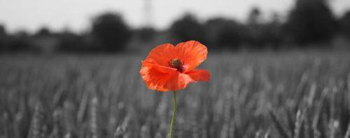 Poppy remembering WW1